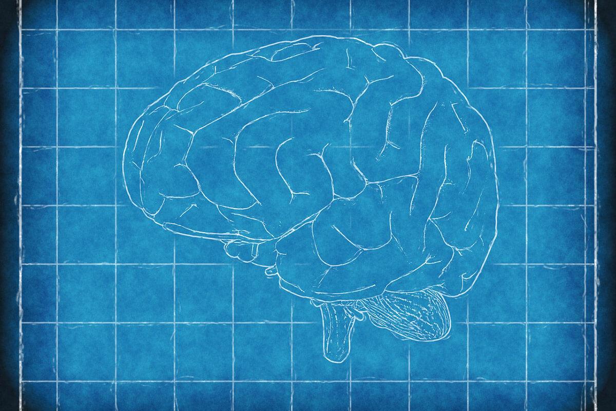 http://www.trimakasi.es/wp-content/uploads/2017/01/brain.jpg